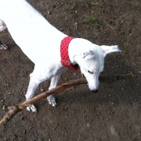 Visiting Vet Specialists | Stick injuries