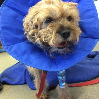 Visiting Vet Specialists | Troublesome bile for Border Terriers