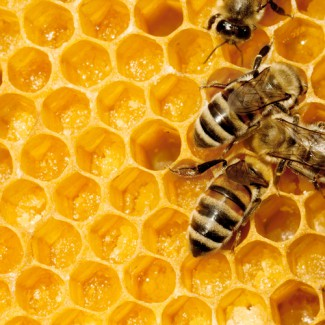 Visiting Vet Specialists | Tell us about the honey…..